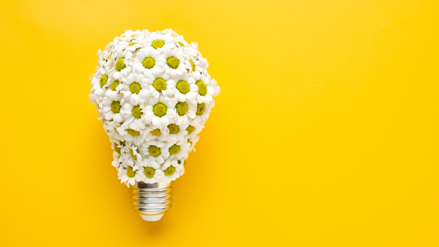 A lightbulb made of daisies to symbolize spring energy